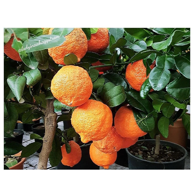 Orange facts 🌿🍊
