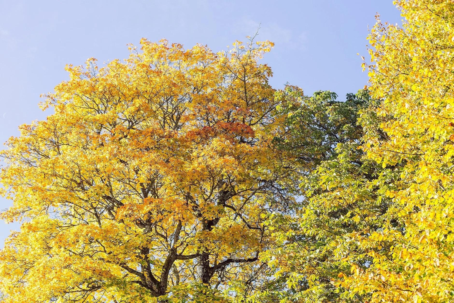 Höstens vackraste färger