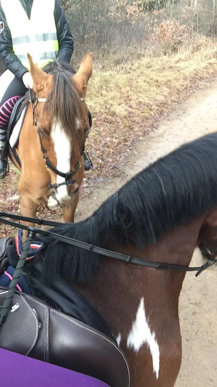 Första ponnyn check