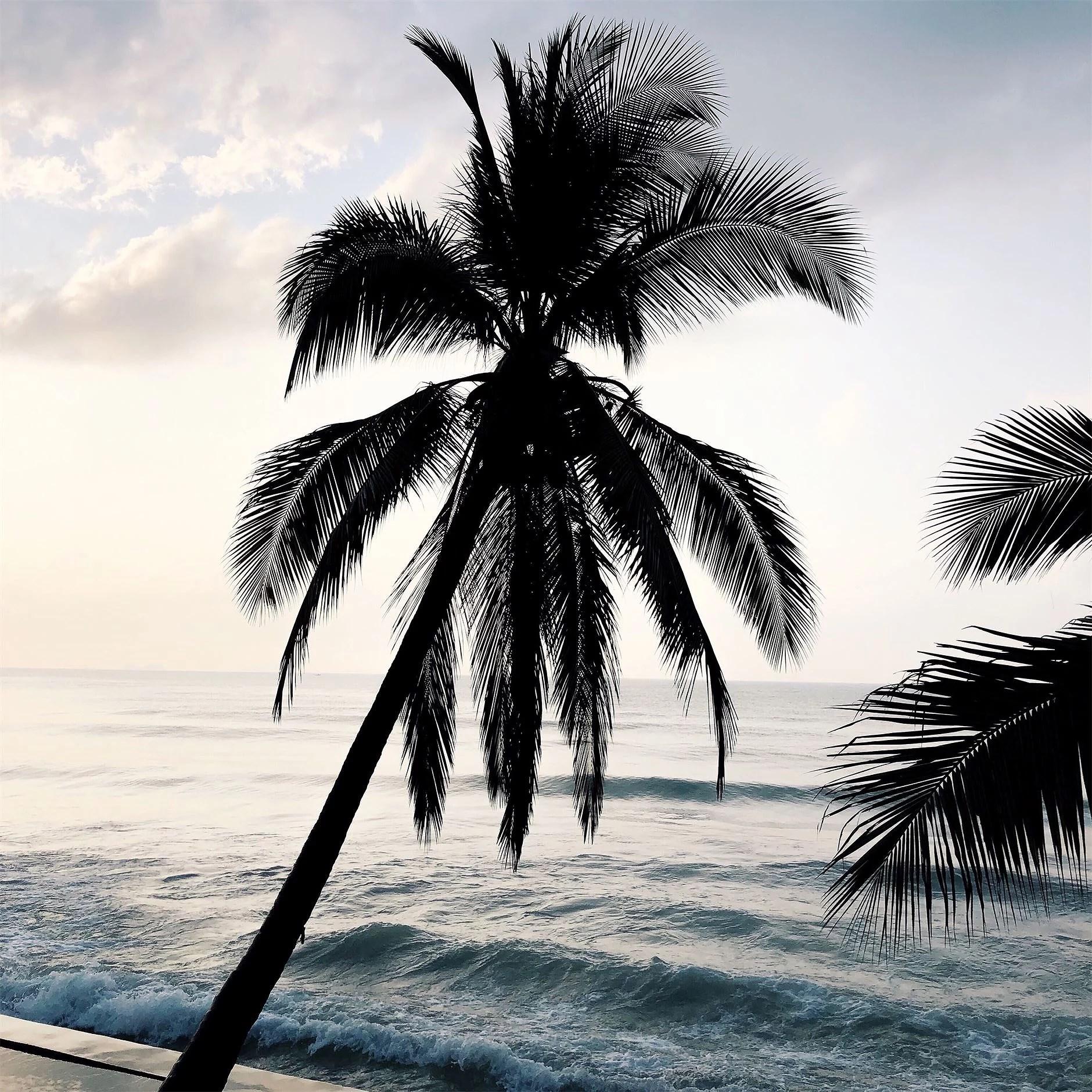 Ensam i paradiset!