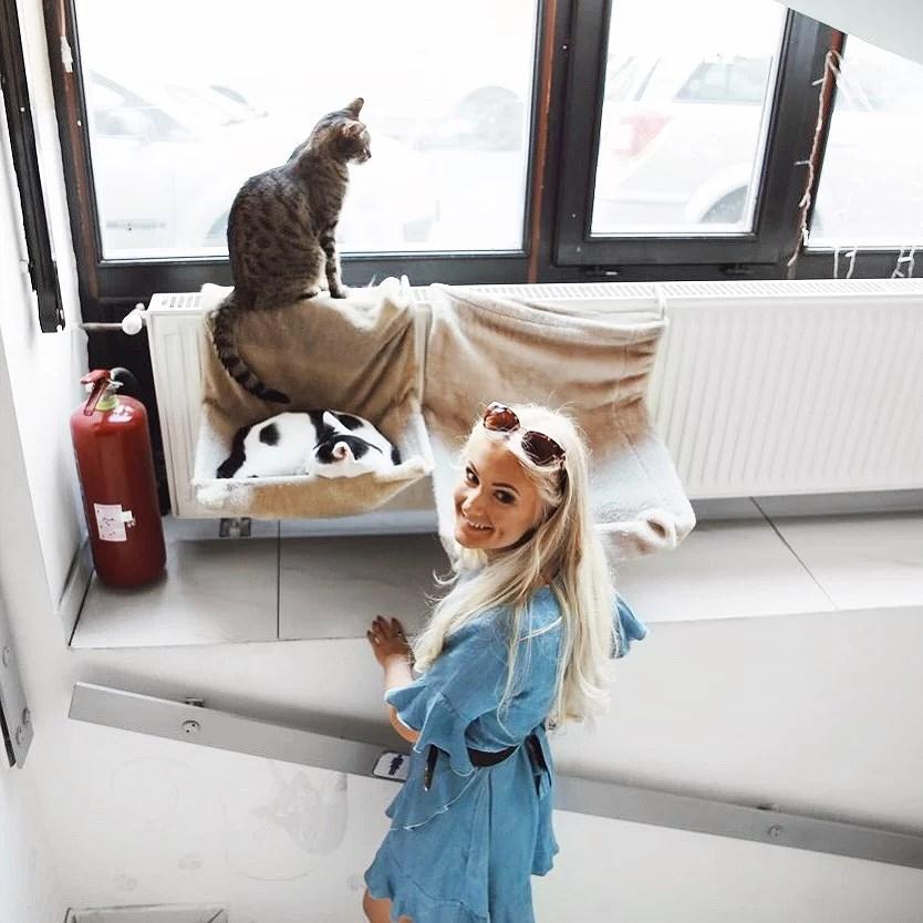 CRAZY CAT CAFÉ IN BUDAPEST