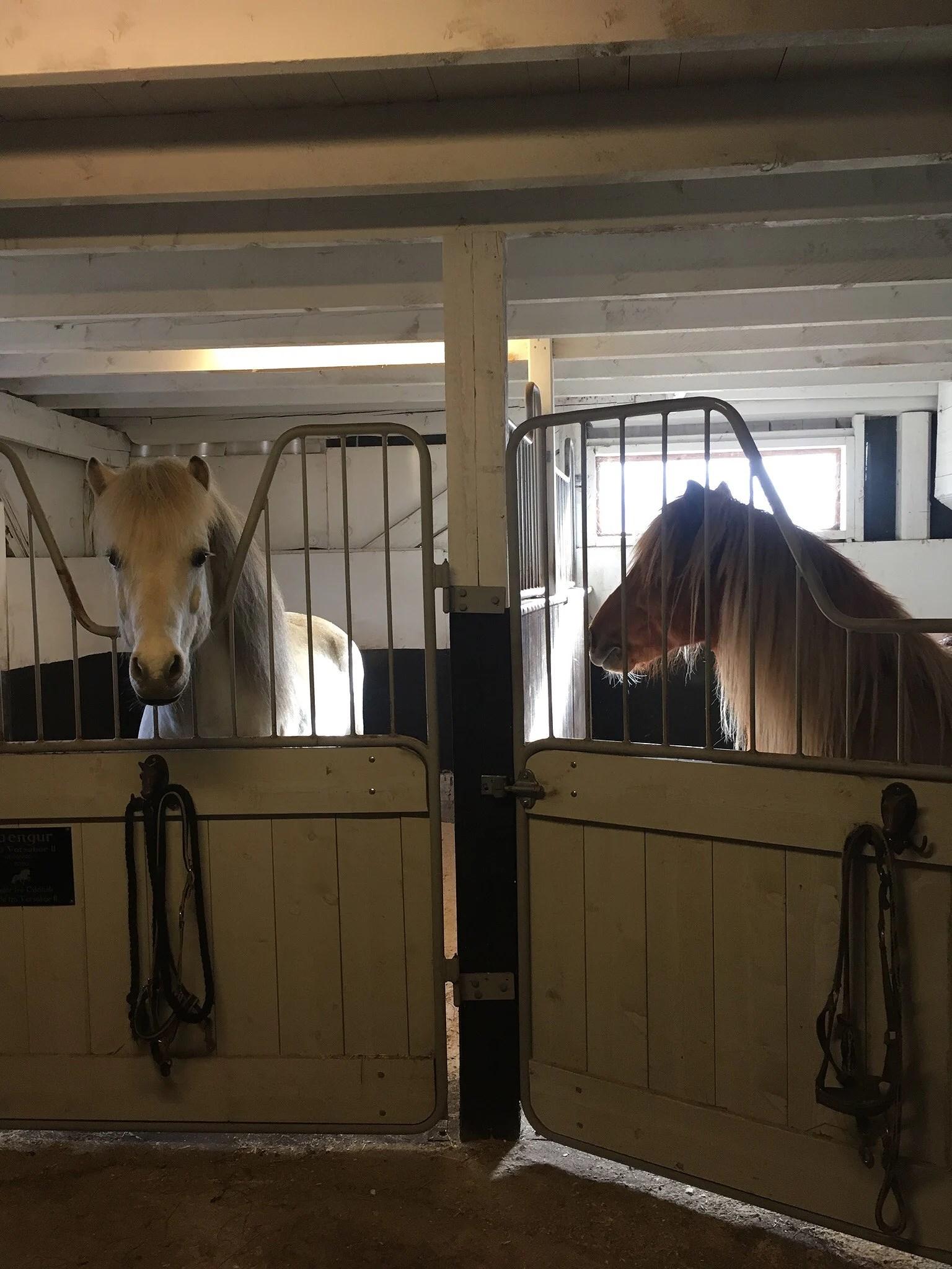 Check av mina hästar hos veterinären