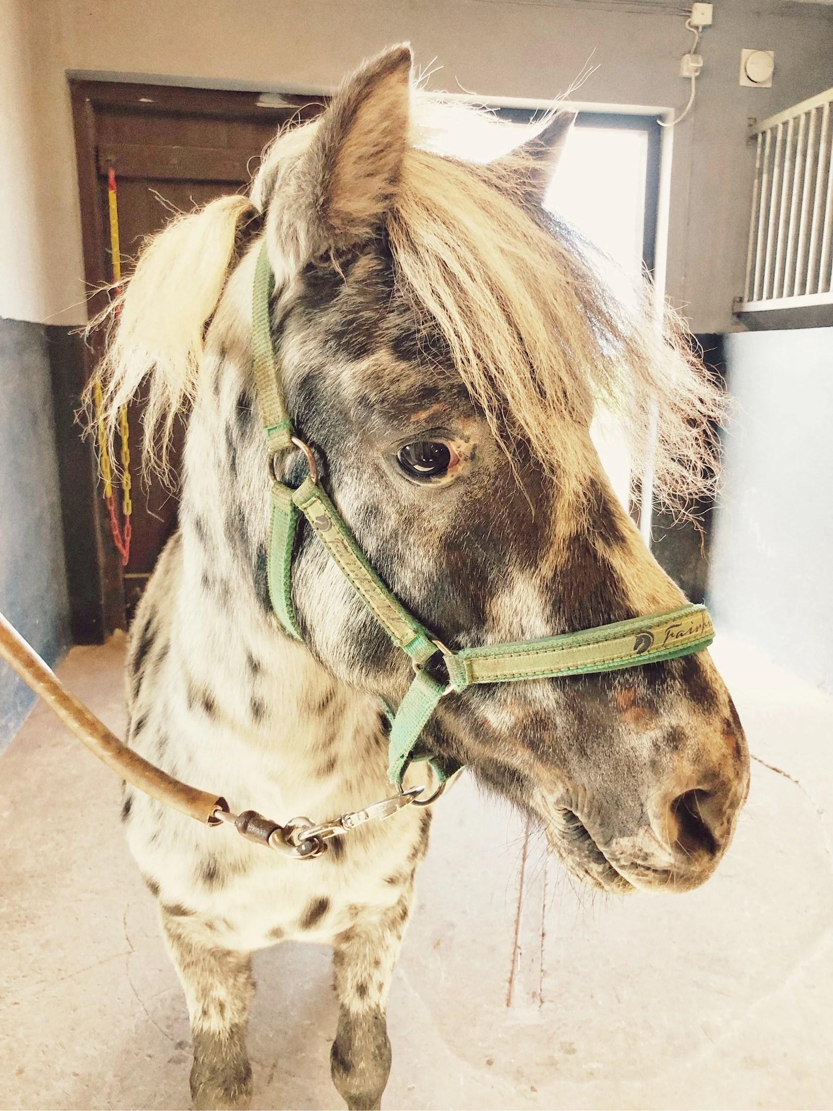 Avmaskning av hästarna