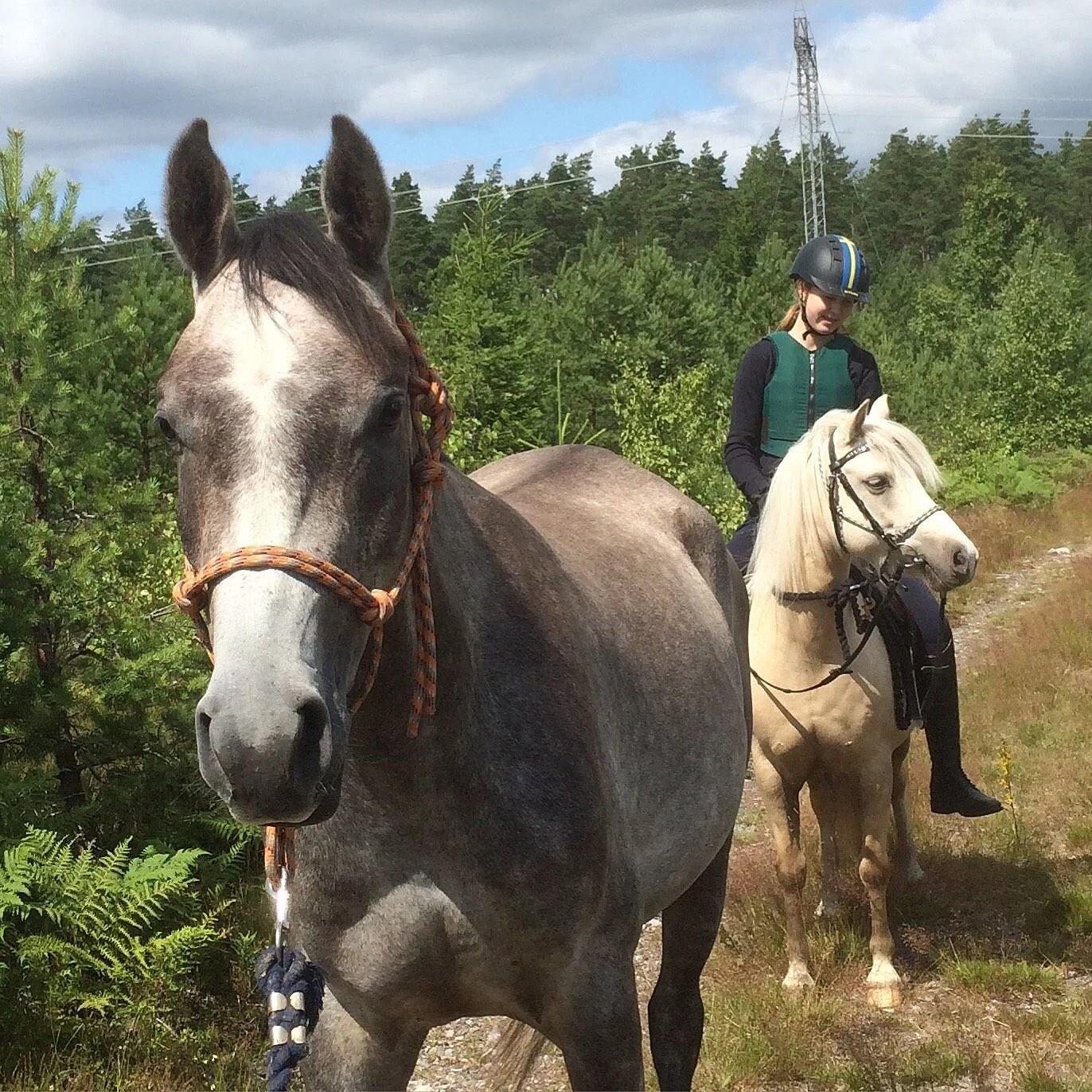 Hästarnas schema v31