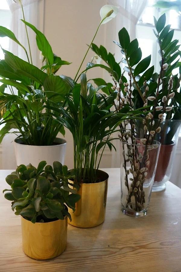 PLANTE OBSESSION