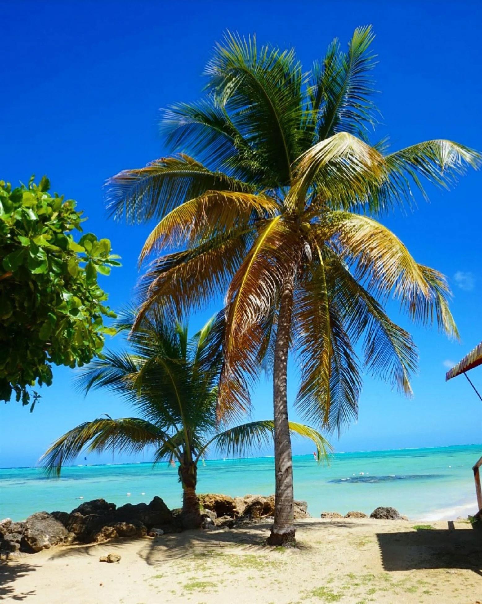 Vi ska till Tobago, igen!
