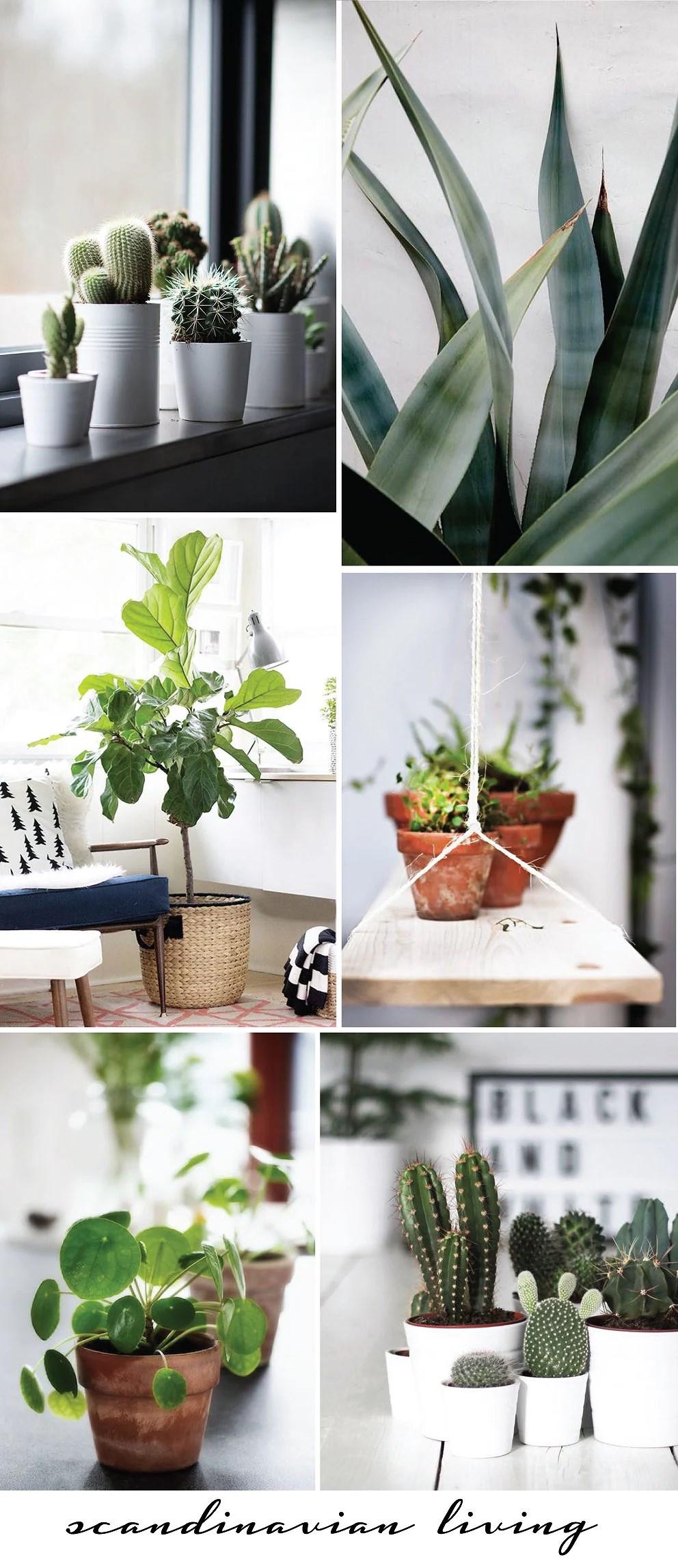Grønne planter, Grønne planter i indretningen, Indretning, Bolig, Boliginspiration, Julie Mænnchen, It's My Passions, Aalborg boligblogger