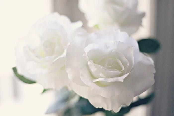 SCUBA & FLOWER