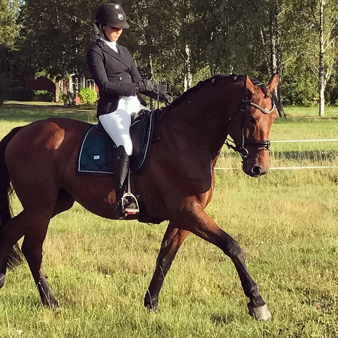 Få hästen på sina bakben
