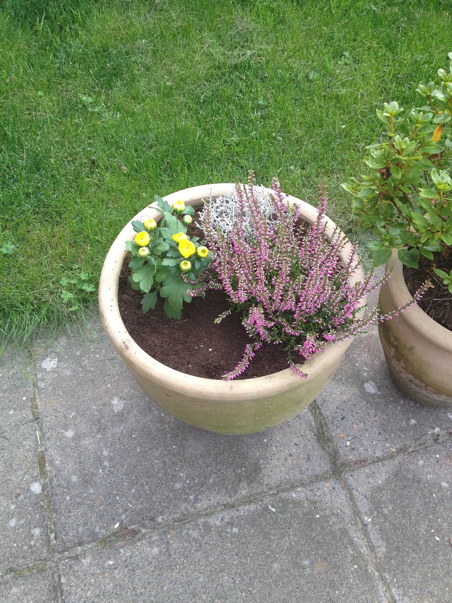 Nyt til haven...