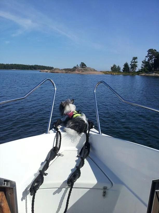 linus på båten