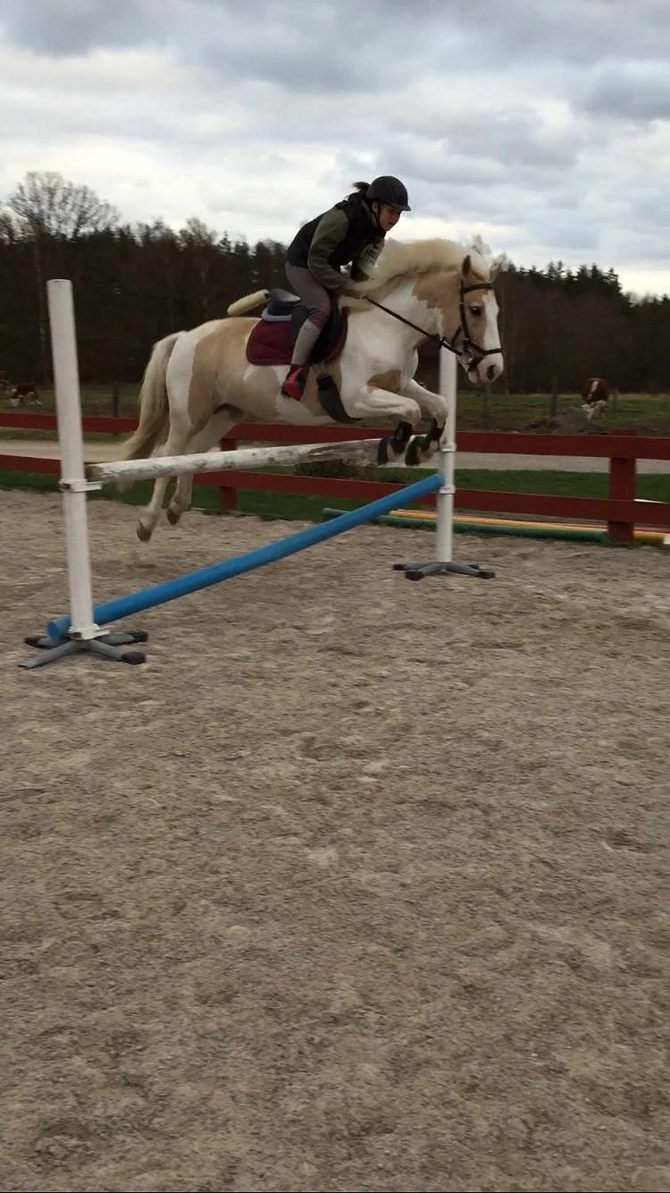 Fina ponnysar-Today pics