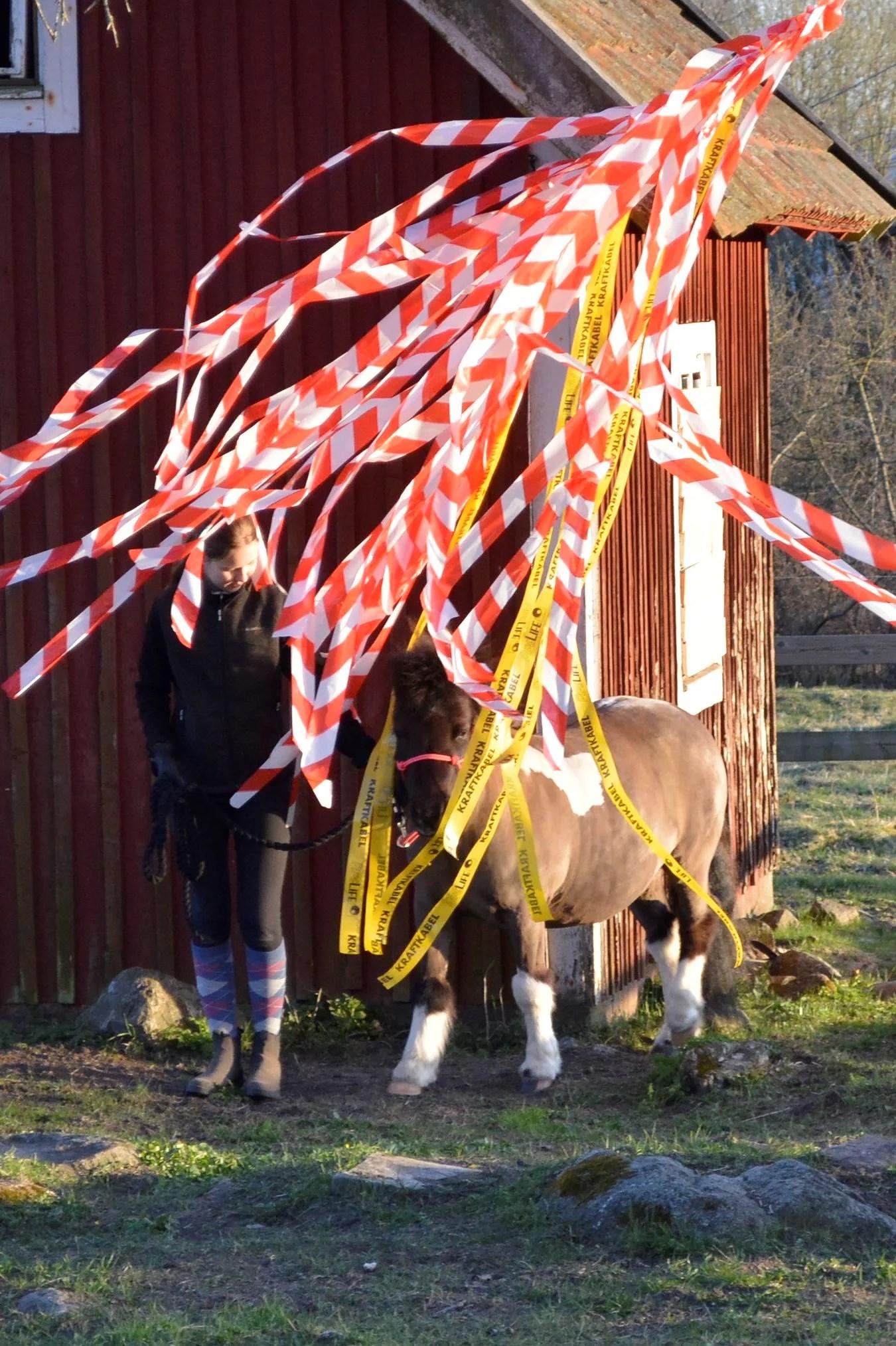 Hästarnas schema v7