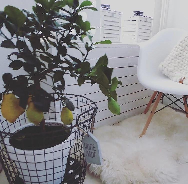 Mooi wat planten doen .nl