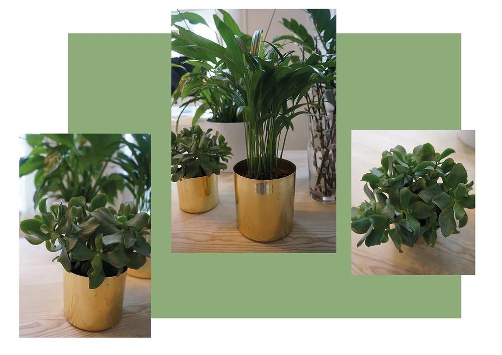 PLANTEOBSESSION01