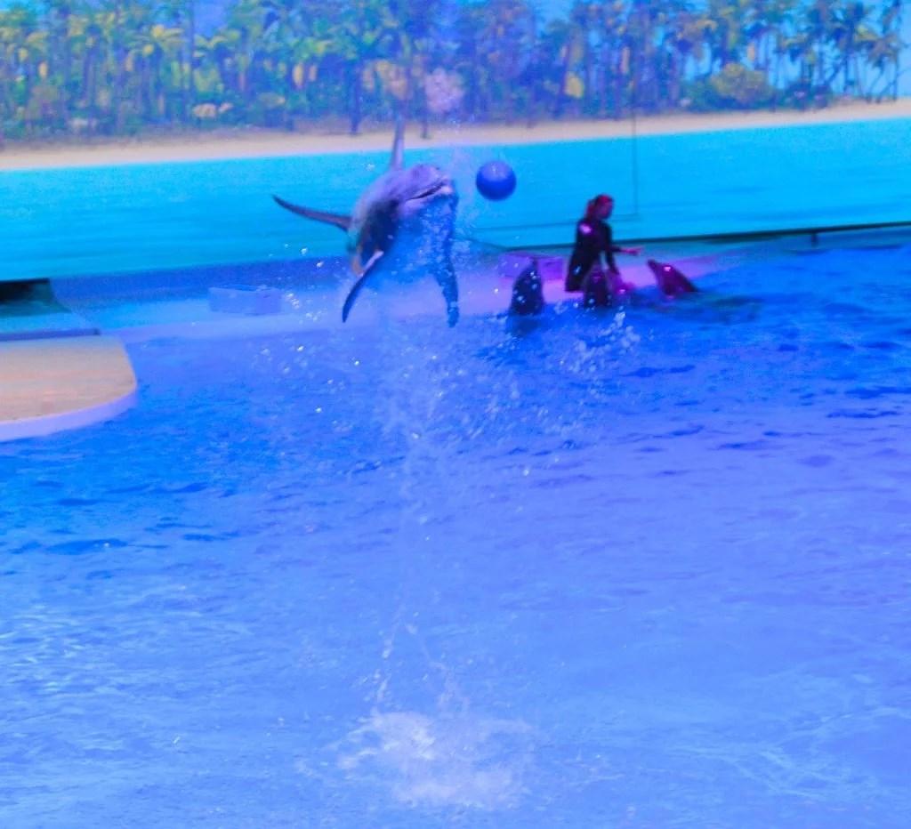 delfiner11