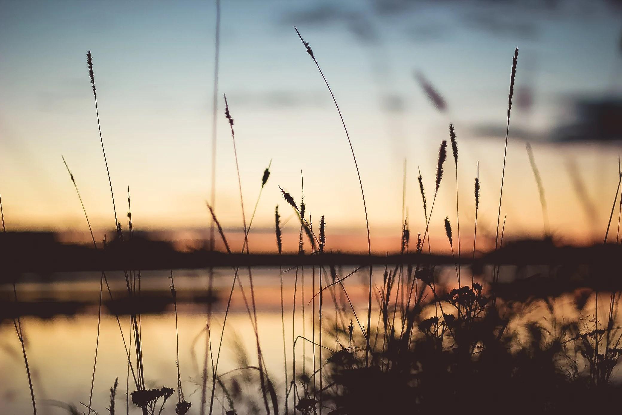 naturens skönhet