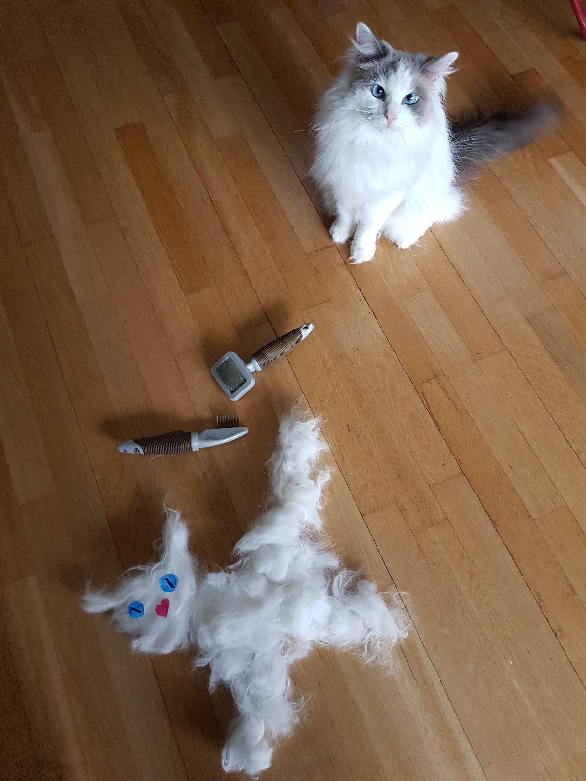 En Helt Ny Katt