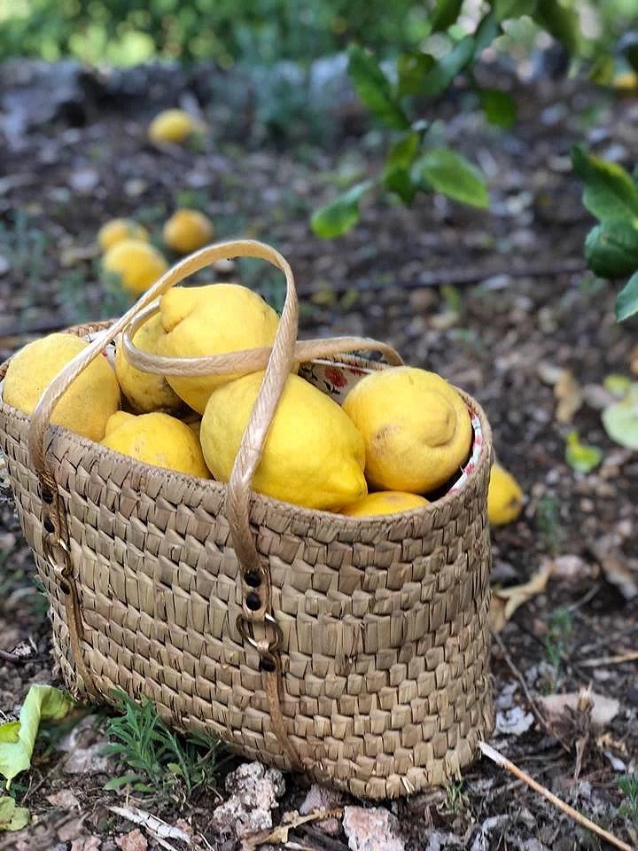 Citron Amok