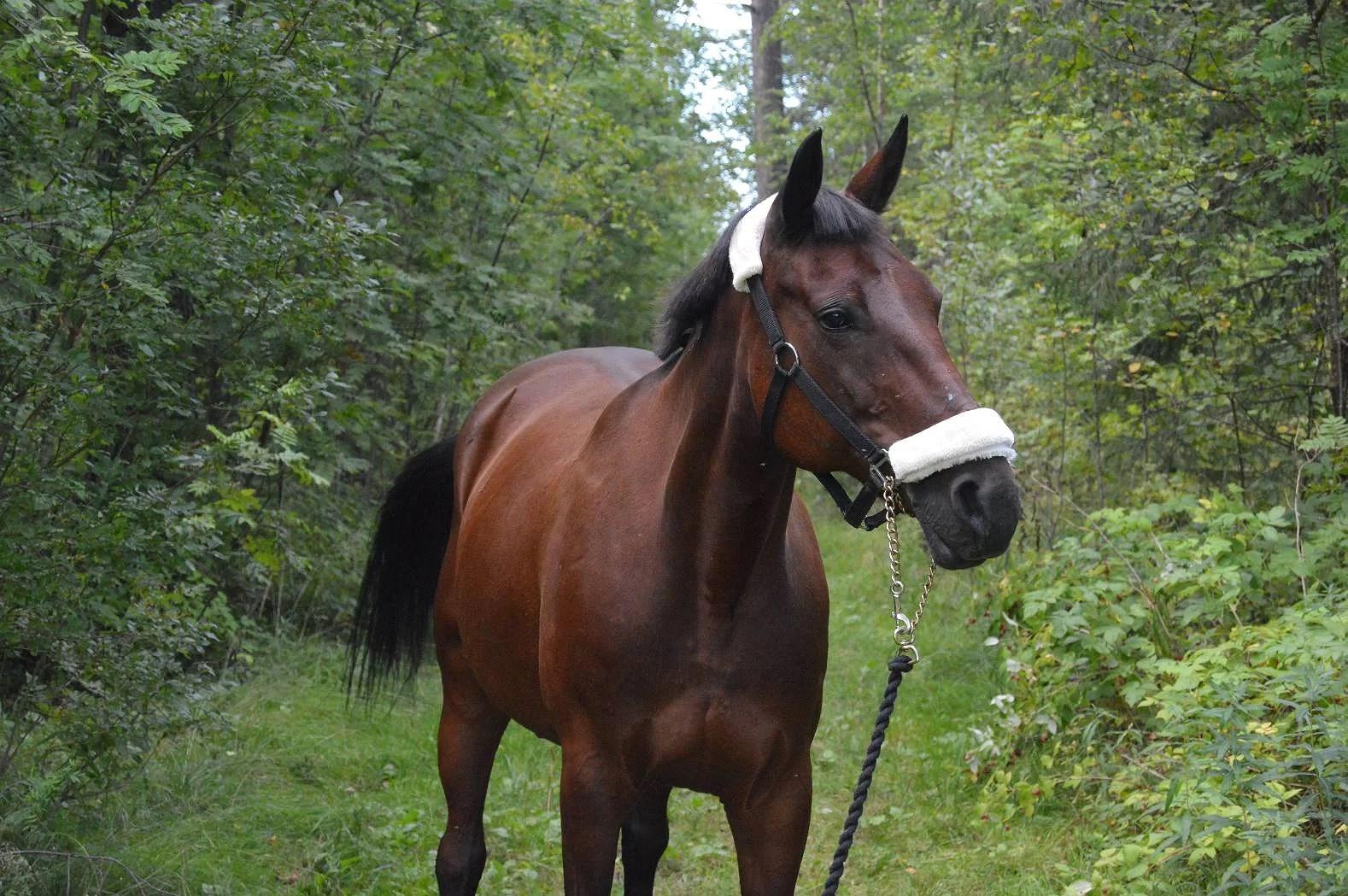 Hästplaner? o.o