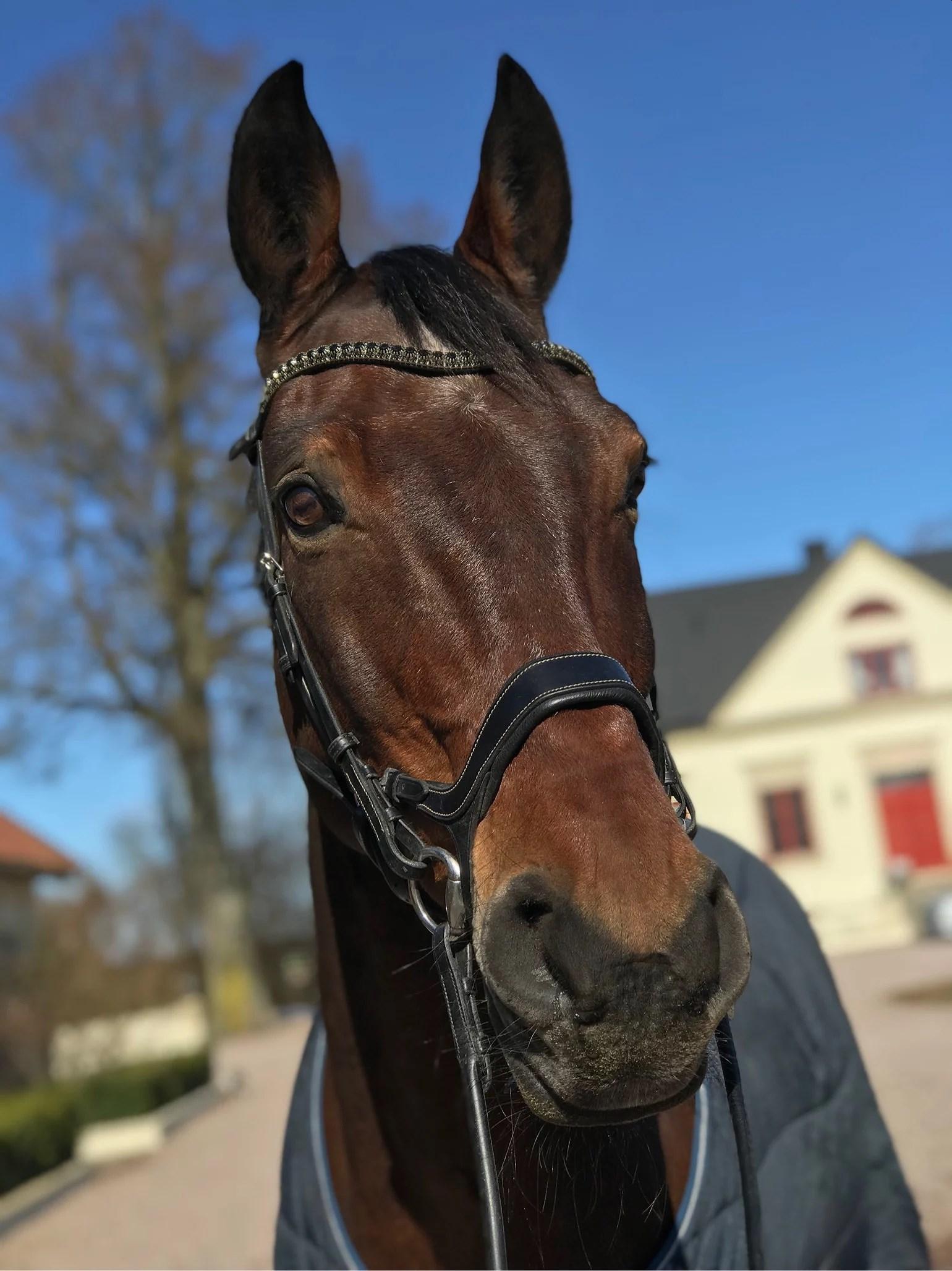 Hästarna i stallet