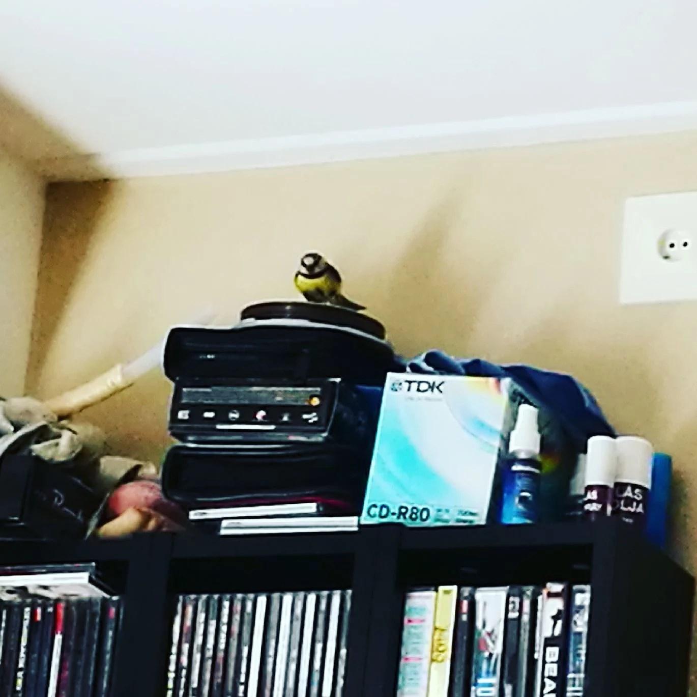 En fågel flög in😱