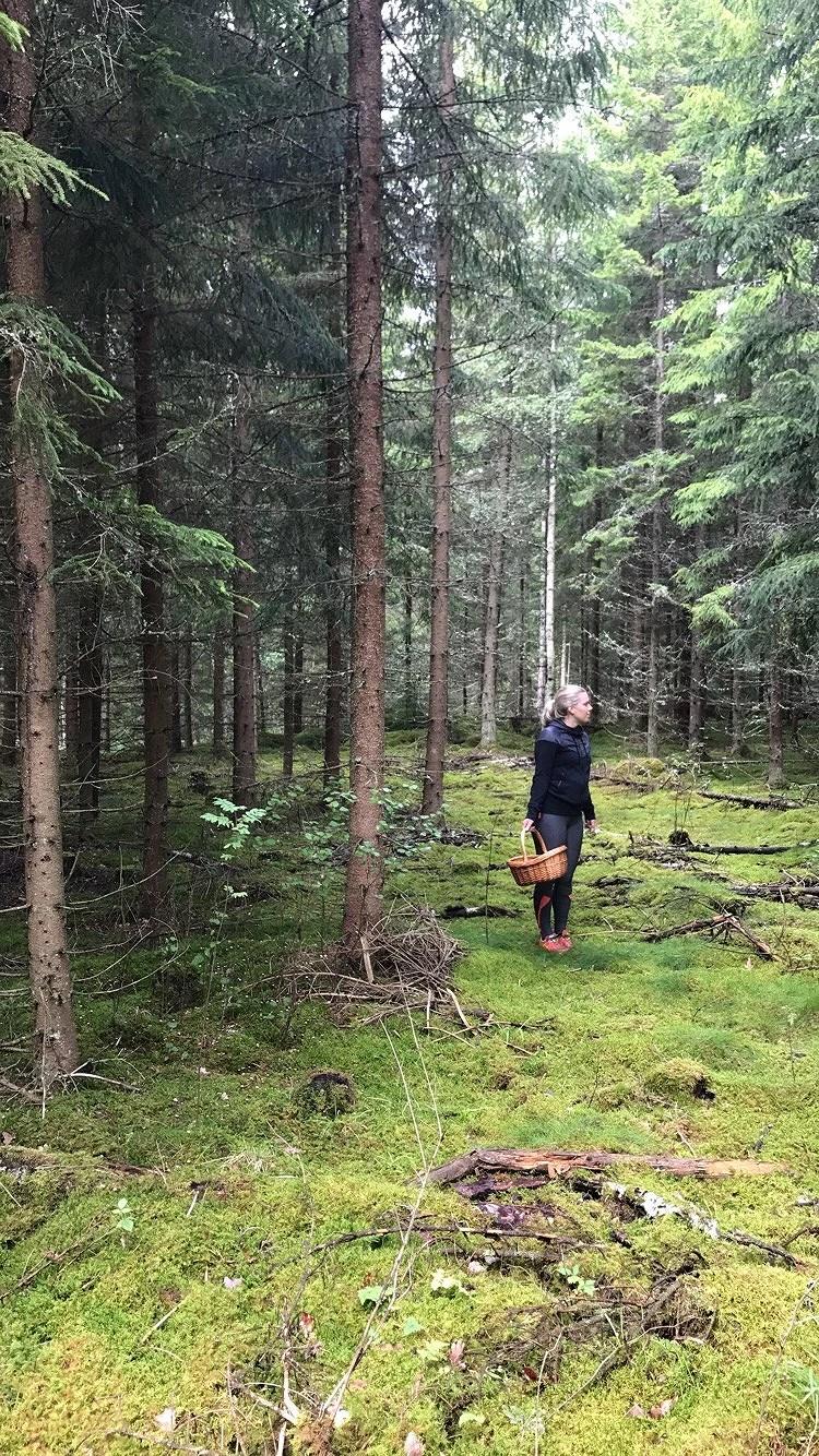 Skogens guld