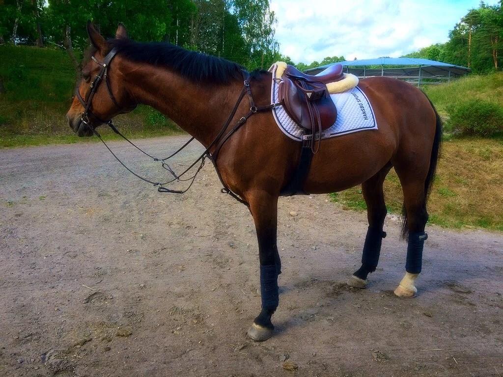 Pigg och glad häst