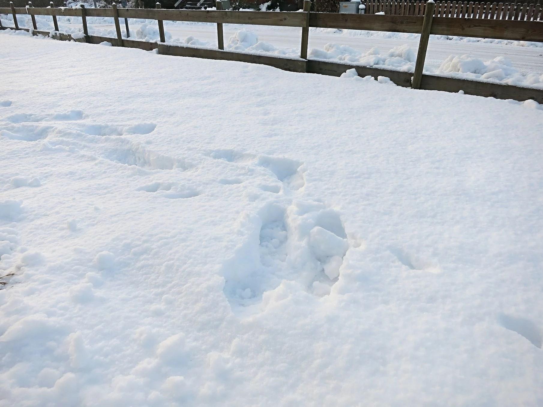 Utelek i snön