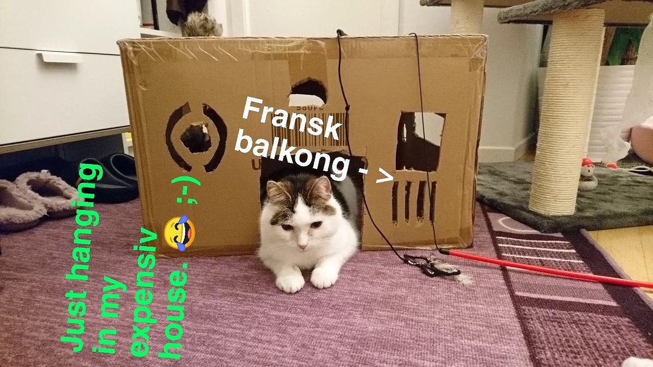Leker med katterna :-D