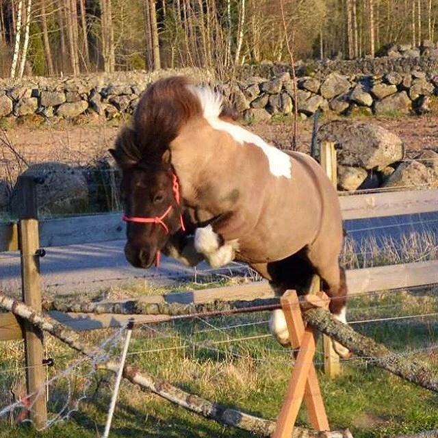 Billig ponny idag