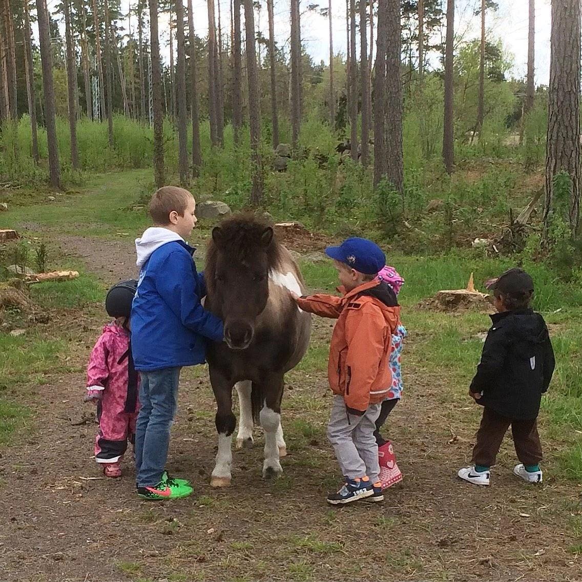 Toppen ponny