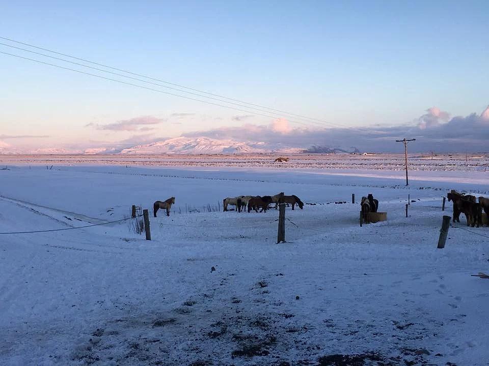 Situationsrapport: Farvel til Hvolsvöllur og goddag Reykjavik