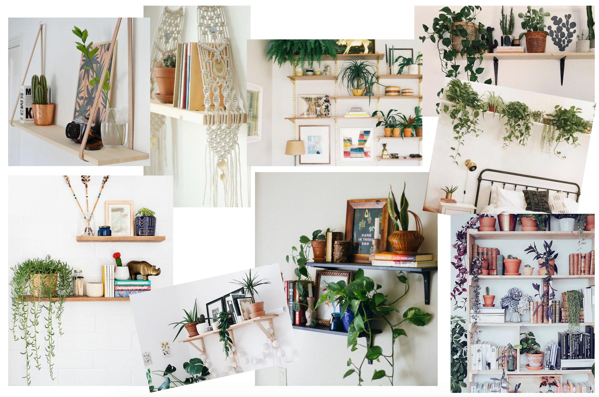 Shelf Inspo