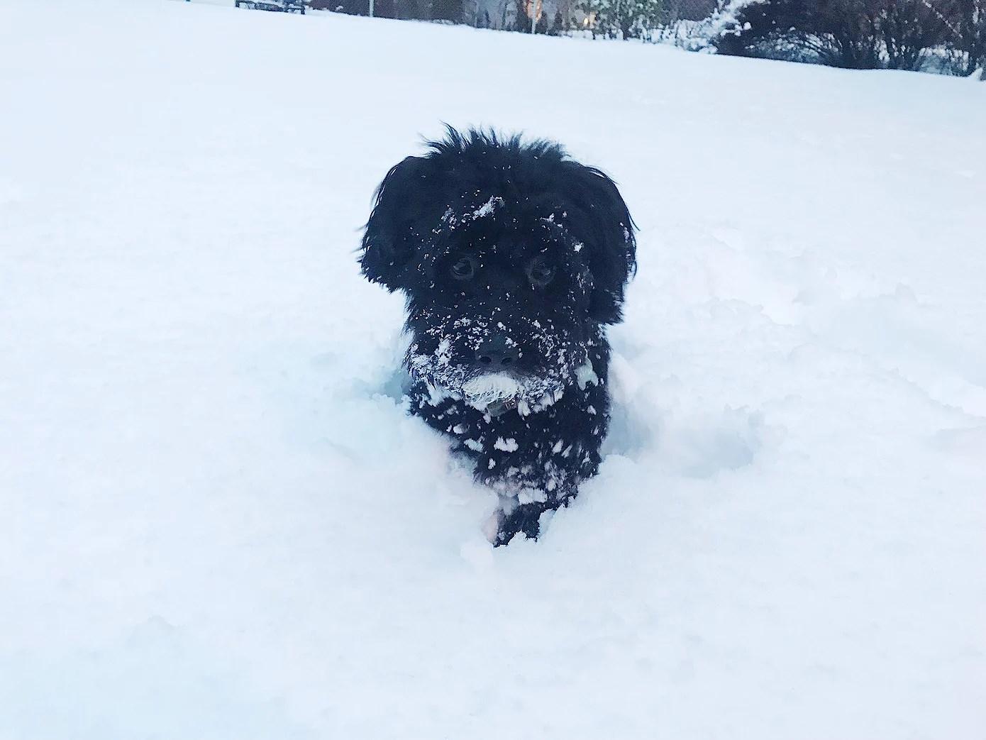 Min lilla Snö hund <3