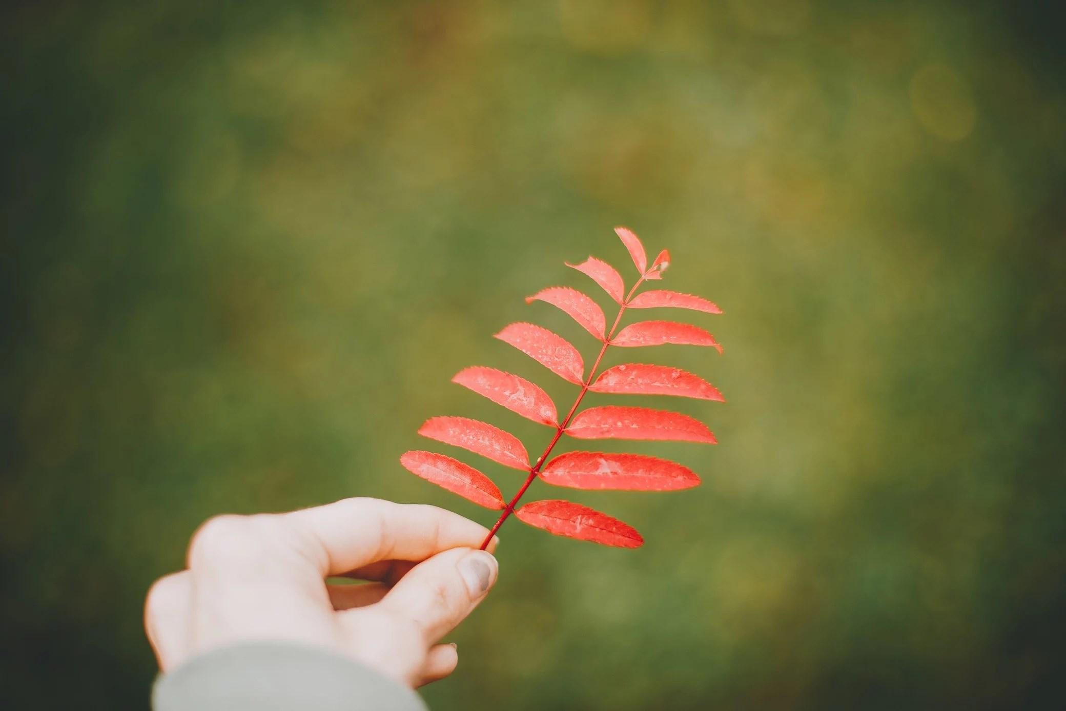 Höstens alla färger