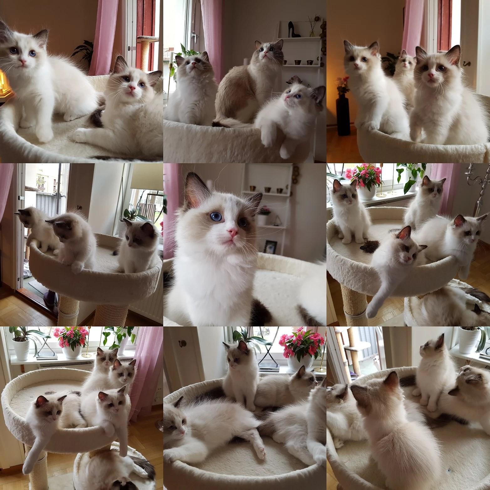 Casper och hans fina syskon.