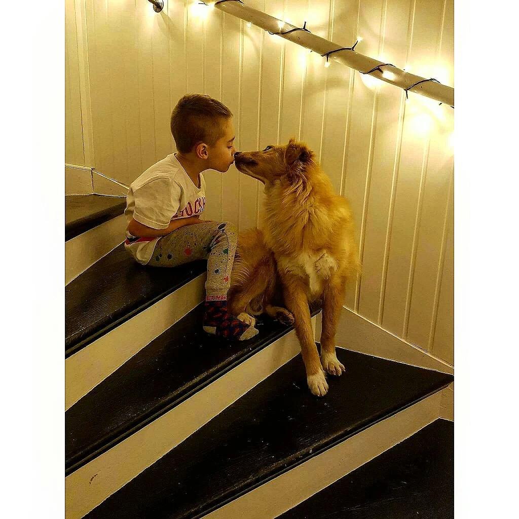 En gatuhund från Rumänien.
