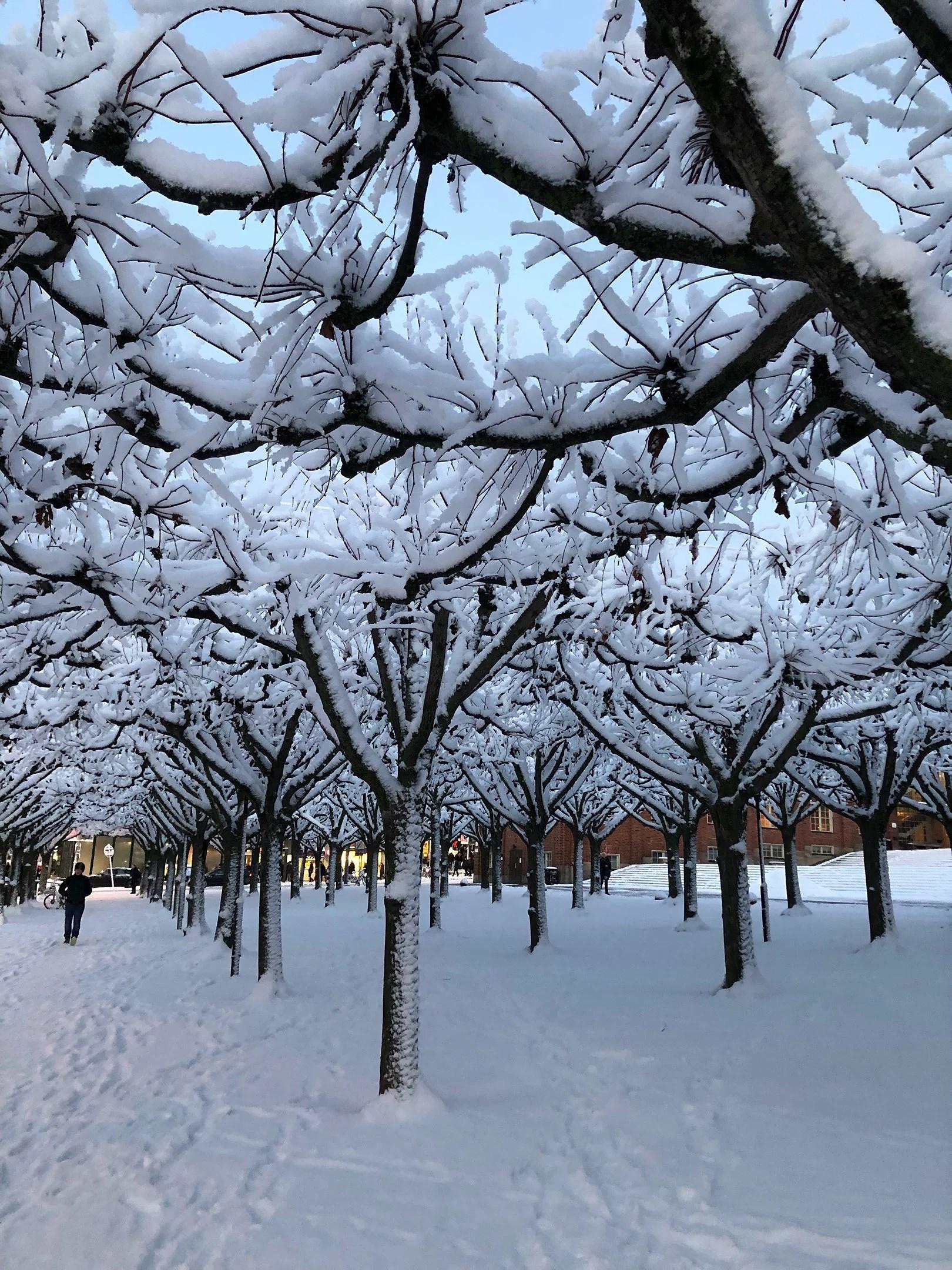 Vinter i stan.