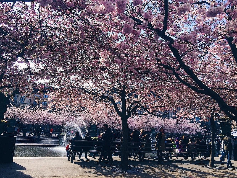 Vackra, vackra Kungsträdgården