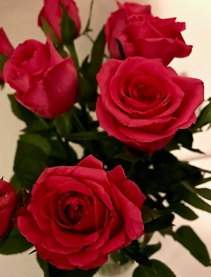 Pole & Roses