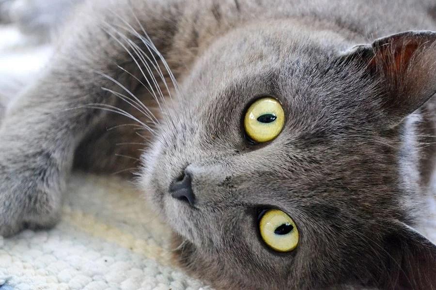 alla snubbar vill ju vara katt