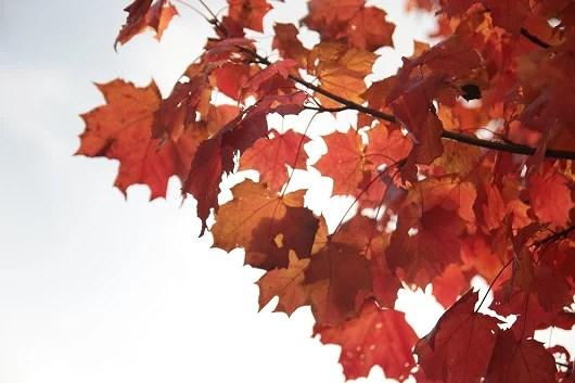 Första löven
