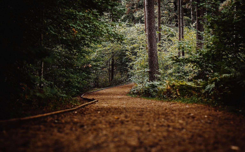 En trevlig promenad i skogen.