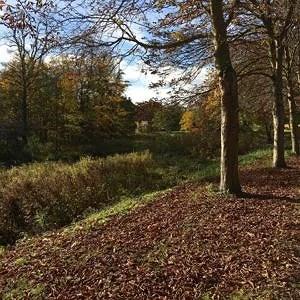 Den smukke danske natur