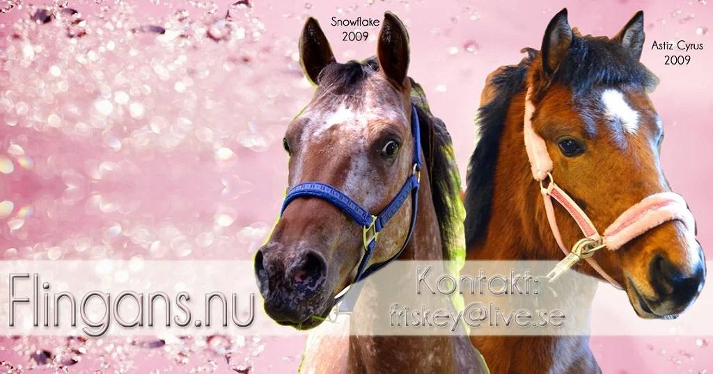 rosaheaderhorseworld
