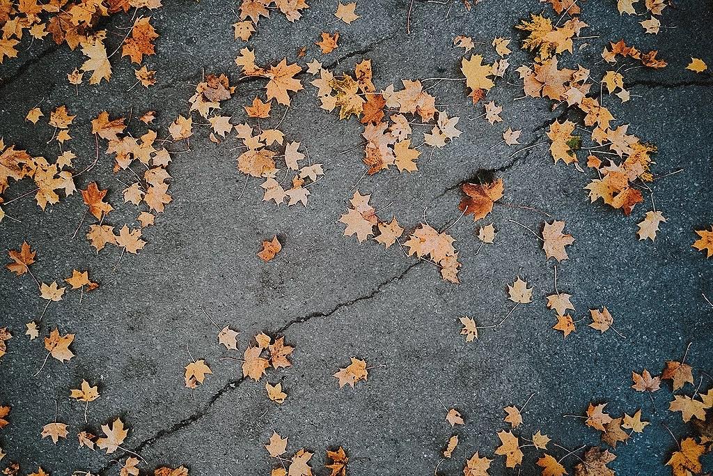 Bär och fallna löv.