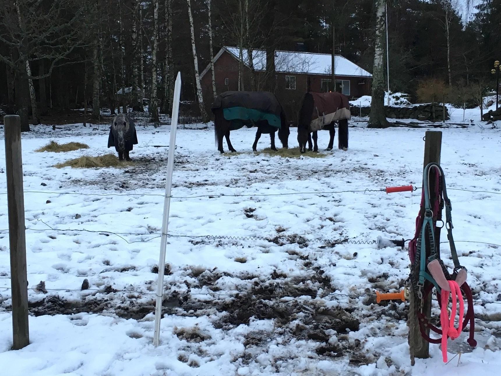 Hästarna utsläppa