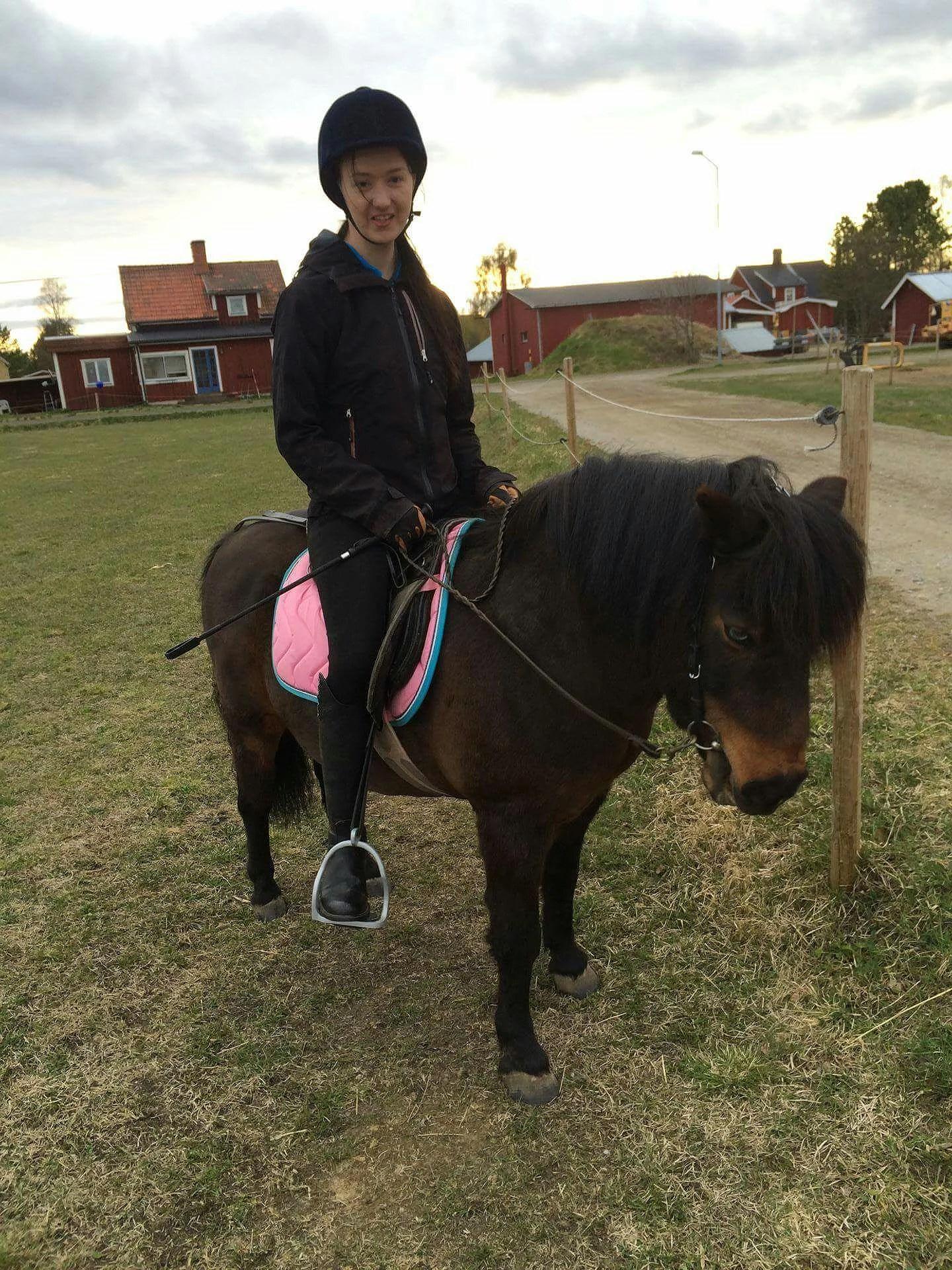 Testade en shetlands ponny