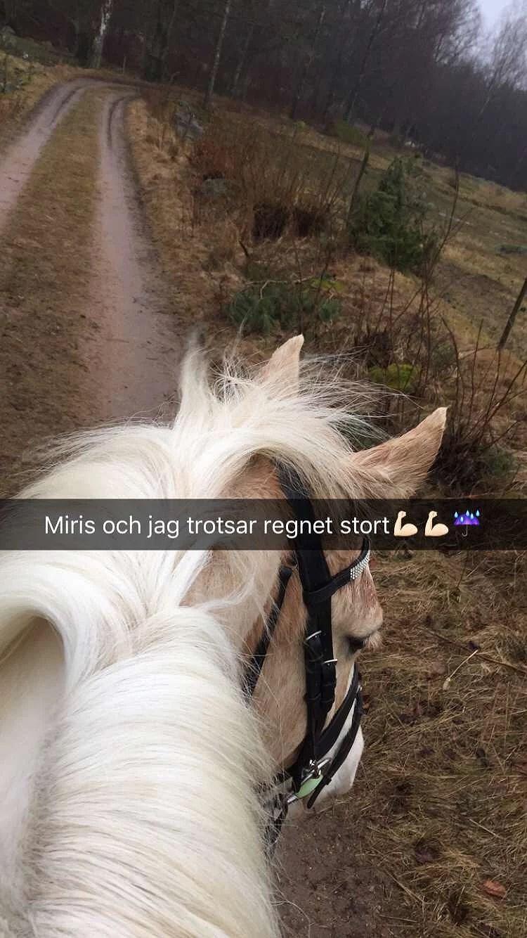 Grymt väder-Ännu grymmare ponny